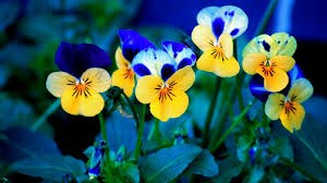 flowers spring flowers images 2560x1600 hq definition wallpapers