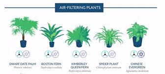 plante d駱olluante bureau le pouvoir des fleurs plantes dépolluantes