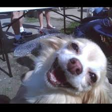 Happy Dog Meme - cheer up instantly with 11 happy dogs