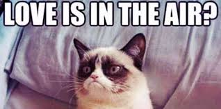 Meme For Love - 21 best grumpy cat memes and funny quotes about love life