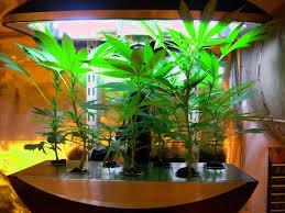 Indoor Herb Garden Light Indoor Vegetable Garden Kit Growing Garlic In The Garlic Grow