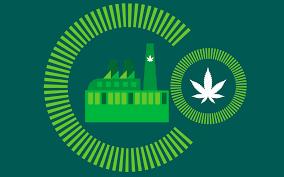Colorado Flag Marijuana Growing Beyond Marijuana And Pueblo U0027s Economic Development