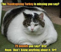 7 and awesome cat memes for thanksgiving