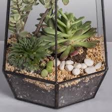 geometric glass succulent terrarium u2013 turtle leaf