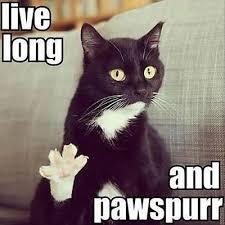 Funny Animal Birthday Memes - funny happy birthday memes jokes trolls gifs collection