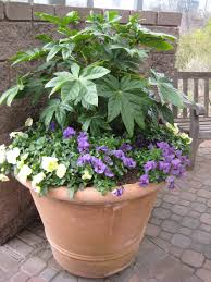 Summer Container Garden Ideas Find Out Which Evergreens Work Wonders In Containers Hgtv