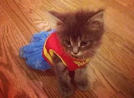 Kitten Halloween Costumes Pet 1025 Halloween Dog Costumes Cat Images Food