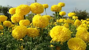 list of floriculture flowers world agriculture