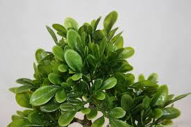 artificial plant decoration home interesting hottest cm moss wall