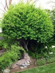 plants tom hoff of modern landscape llc in las vegas recommends