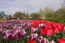canada flowers slideshow 10 best places in canada to stop and smell the flowers