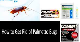 How To Get Rid Of Roaches In The Bathroom Palmetto Bug Vs Cockroach What U0027s The Difference Scientists All