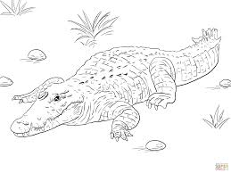 ancient egyptian picture of nile crocodile coloring page free