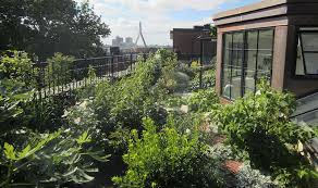 Roof Garden Design Ideas Roof Garden Design