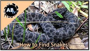 How To Find Snakes In Your Backyard How To Find Snakes Primitive Tim Animalbytestv Youtube