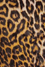 136 best animal print images on pinterest animals animal prints