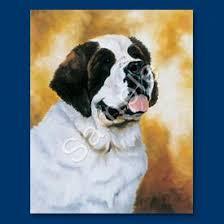 bernard big gentle dogs
