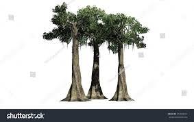 kapok tree cluster isolated on white stock illustration 273938219
