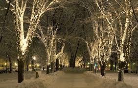 winter park christmas lights christmas wonderland christmas pinterest christmas