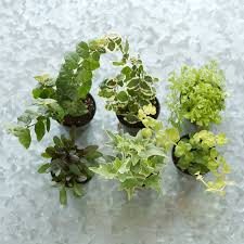 terrarium plant collection hanging terrain