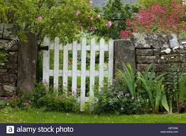 garden gate flowers white wooden garden gate set in a drystone wall with colourful
