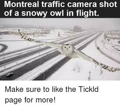White Owl Meme - montreal traffic camera shot of a snowy owl in flight make sure to