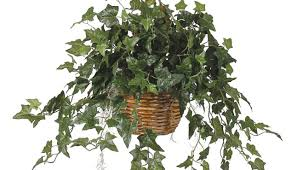 Plant For Bedroom English Ivy Plants For Your Bedroom To Help You Sleep Dr