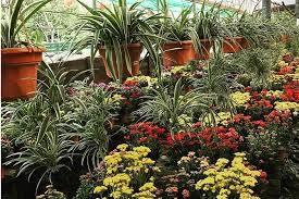 Nursery Plant Supplies by Where To Buy Gardening Supplies And Plants In Singapore The Finder