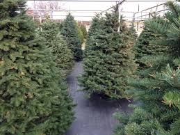 glt u0027s grow best christmas tree picks wglt