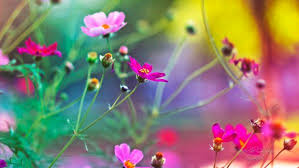 www flowers www flowers wallpaper