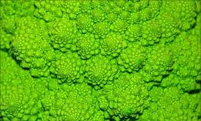 fractal pattern in nature 14 amazing fractals found in nature mnn mother nature network