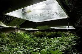 meilleur chambre de culture culture du cannabis en intérieur humidité relative et
