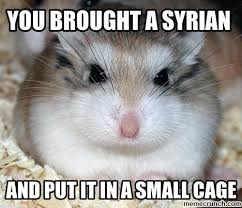 Rodent Meme - 40 very funny hamster meme images and pictures