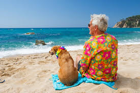 Hawaii Travel Network images Want fido to lei around hawaii better say aloha to your vet first jpeg