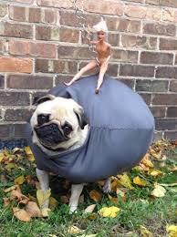 Dog Spider Halloween Costume 22 Funny Dog Costumes Halloween Brit