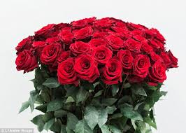 how much does a dozen roses cost 15 gifts to buy your instead of a dozen roses daily