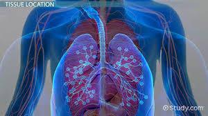 What Is Dead Tissue Called Neuroglia Function U0026 Definition Video U0026 Lesson Transcript