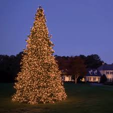 outdoor lighted trees on sale tree