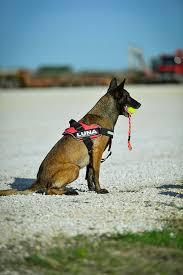 Comfort Flex Dog Harness Idc Duo Flex Dog Harness Julius K9