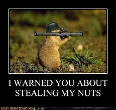 Squirrel Nuts Meme - i warned you about stealing my nuts very demotivational