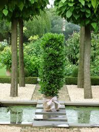 laurus nobilis bay tree bay laurel in stylish garden laurus
