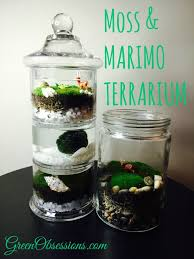 moss terrarium follow up opened or closed that is the question