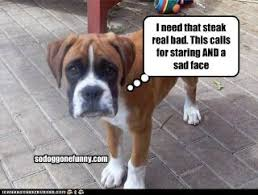 boxer dog sayings 41 best funny boxer dogs images on pinterest animals funny