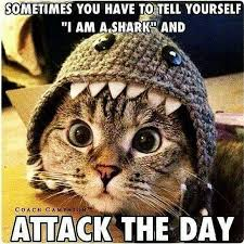 Funny Encouraging Memes - you got this motivation believeinyourself sharks randomly