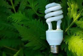 living u0026 going green hawaii guide to eco friendly light bulbs