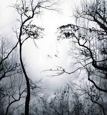 tree face tree face photoshop wonder los cuatro ojos