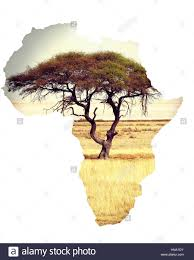 Eastern Africa Map by Typical Large Acacia Tree In The Open Savanna Plains Of East
