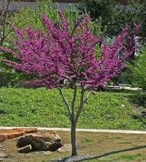 specific trees edmond oklahoma city guthrie ok