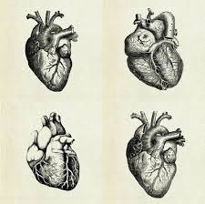 He Made Accurate Drawings Of The Human Anatomy Best 25 Heart Anatomy Ideas On Pinterest Diagram Of The Heart