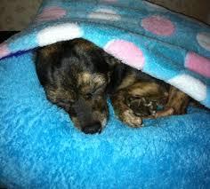 Burrowing Dog Bed Diy Dog Bed Or Cat Bed 9 Steps